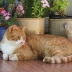 Figaro (Herzlich Willkommen…)